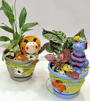 Plants Compositions Wholesale